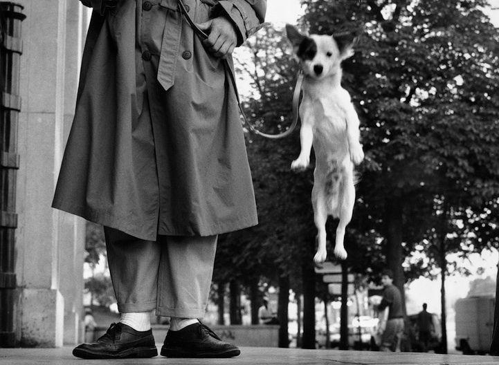 Dog jumping; Elliott Erwitt, Paris, 1989